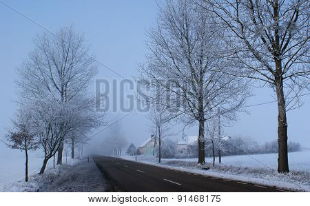 Winter tree and a snowy road