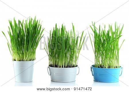 Fresh green grass in small metal buckets, isolated on white
