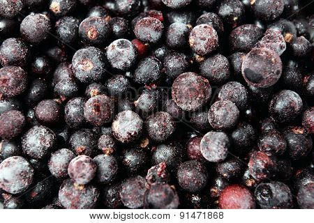 Blackberry in bowl close up