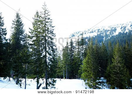 Beautiful view of mountains, trees and sky in wintertime