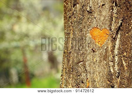 Heart carved in tree close-up