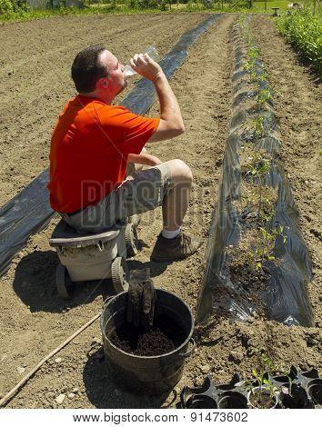 Organic Farmer Taking A Water Break After Finishing A Row
