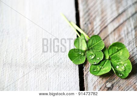 Green clover leaves with drops on wooden background