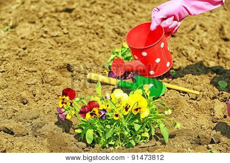 Female hands in pink gloves watering flowers, close-up