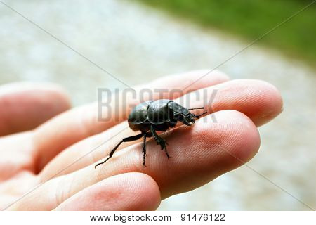 Black beetle on female hand, closeup