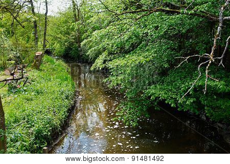 Small Beautiful Brook Stream In A Forest
