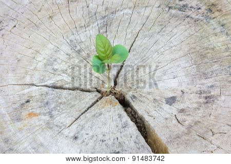 Seedling Growing In A Timber ,focus On Seeding