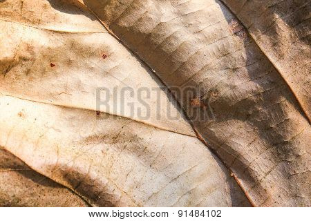 Autumn Withered Leaves  Abstract Texture Background