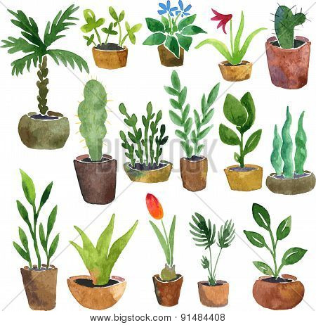 watercolor drawing home plants