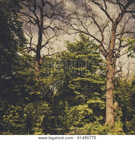Spooky forest abstract natural backgrounds for your design