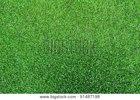 fresh spring green grass texture for background