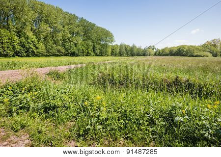 Colorful Landscape On A Sunny Day In Spring