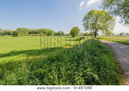 Sunny Rural Landscape In Springtime
