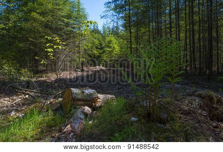 Forest in sunlight in spring