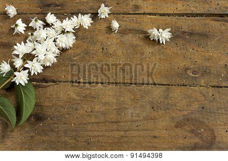 Spring flower over wood background
