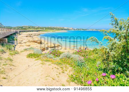 Flowers And Plants By Capo Testa Shoreline