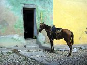foto of mule  - A mule, or horse, which is parked outside of a residential home. Waiting for it