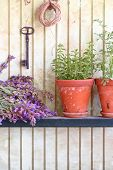 stock photo of origanum majorana  - Bunch of sage and pot with herbs in front of an old wall - JPG