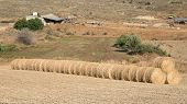 picture of hay bale  - Agriculture farmland with hay bales after harvesting - JPG