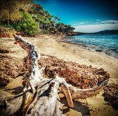 image of driftwood  - white driftwood in Mugoni shoreline - JPG