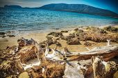 stock photo of driftwood  - driftwood by Mugoni beach shoreline - JPG