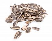 image of sunflower-seeds  - Close up of black sunflower seeds - JPG
