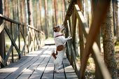 pic of jack russell terrier  - Dog Jack Russell Terrier walks in the park summer - JPG