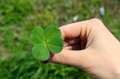 foto of four leaf clover  - Female hand with four leaves clover - JPG