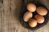 picture of bird egg  - Fresh eggs in birds nest in vintage style moody natural lighting set up - JPG