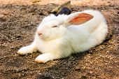 foto of zoo animals  - rabbit have white and black ear in the cage animal zoo - JPG