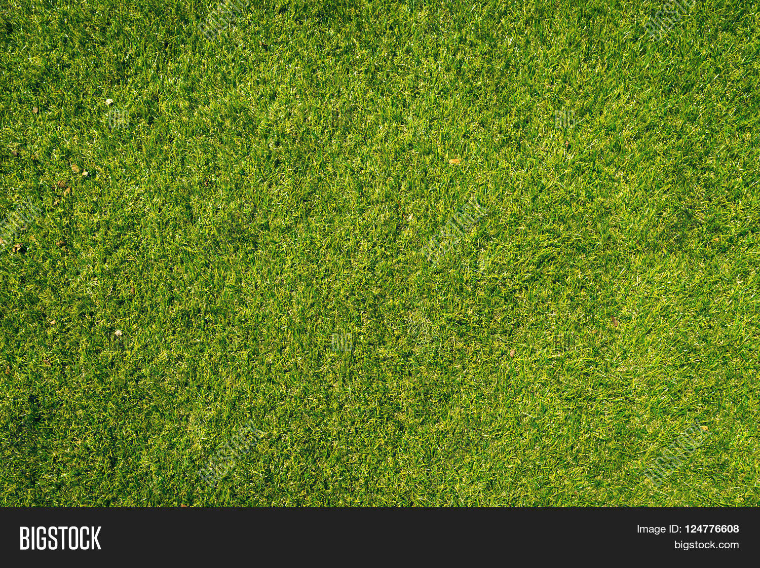 Natural Grass Texture Patterned Image & Photo | Bigstock