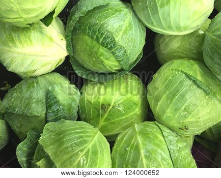 Fresh picked heads of lettuce make a lettuce background