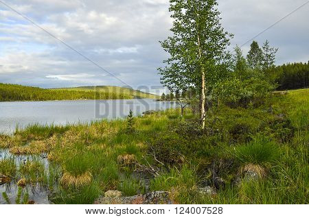 Scenic view on the birch tree, that is on river bank with high bushy grass and stones. On the background there is forest on hills. Blue sky covered with large cumulus clouds.