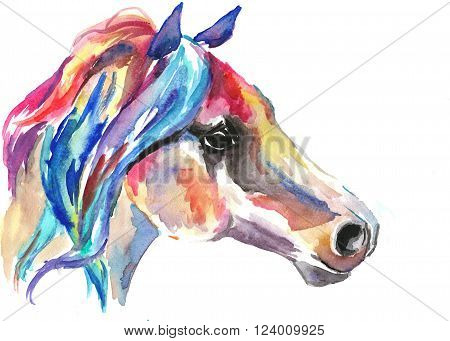 Horse head. Color bright watercolor illustration. Paint.