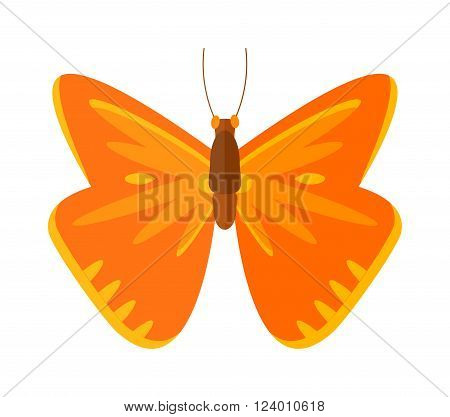 Flat butterfly vector. Flat butterfly isolated on white background. Flat butterfly vector illustration. Colored flat butterfly isolated on white background.