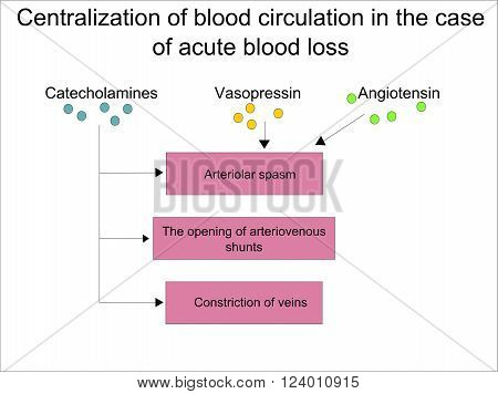 Centralization of blood circulation in the case of acute blood loss