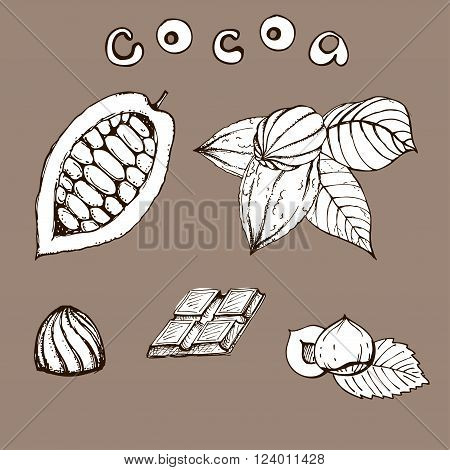 hand drawn ink cocoa beans. vector illustration of leaves and fruits of cocoa beans. Vector eps 10 cocoa beans.