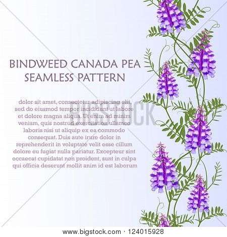 Vertical border seamless pattern wildflowers bindweed bird vetch canada pea for banners. Vector illustration