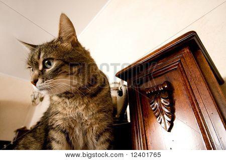 cat at interior