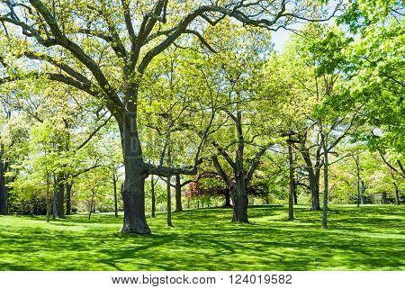 A bright green landscape in Bayard Cutting Arboretum State Park in Oakdale Long Island.