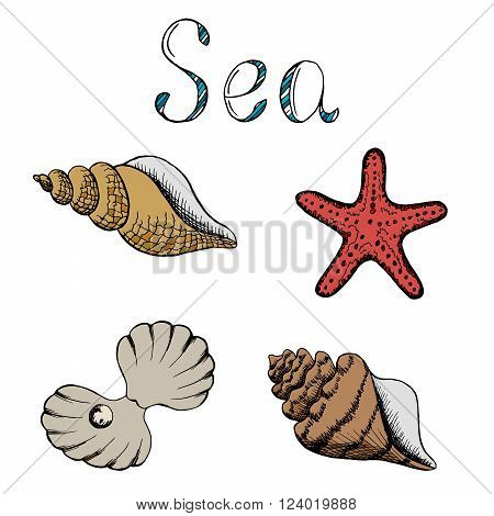 Shell set graphic art color illustration vector