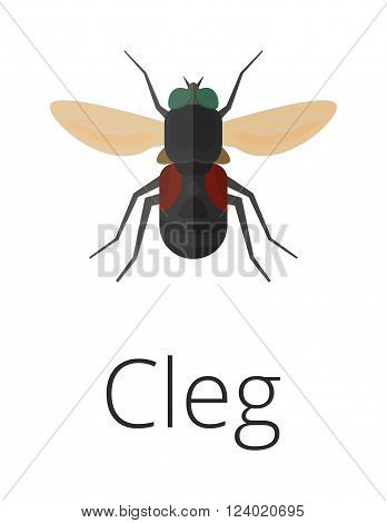 Cleg skin parasite insect bug vector. Bug insect Cleg isolated on white background. Insect skin parasite biology bugs. Skin parasite Cleg flying bugs. Cleg bugs.