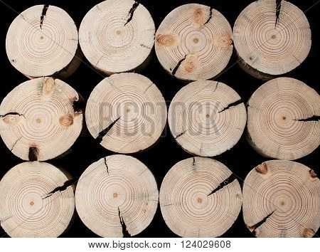 The pattern of the twelve cracked of saw cuts of pine  on a black background