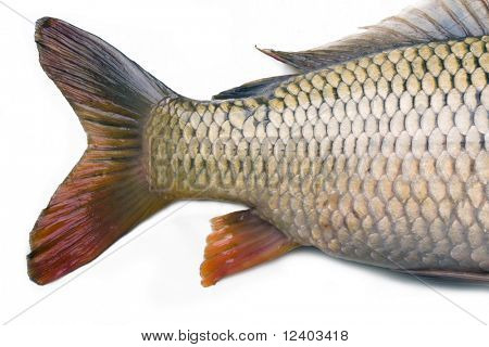back part of carp  isolated on white background