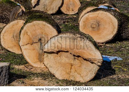 logs for firewood