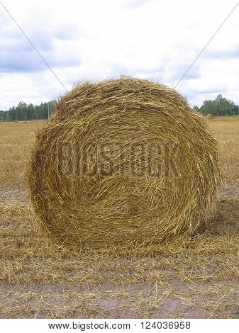 haystack rolled into the coil lies on a sloping field in the summer