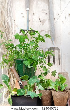 planting in peat pots on a rustic wooden garden worktop