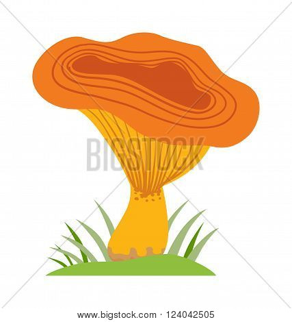 Mushrooms Illustration on white background. Flat mushrooms vector illustrations. Isolated mushroom symbol. Organic nature mushrooms.