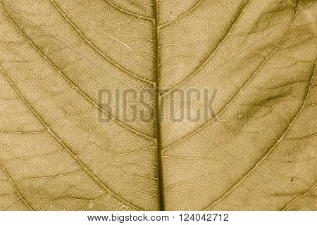 Leaves detail surface of background or backdrop