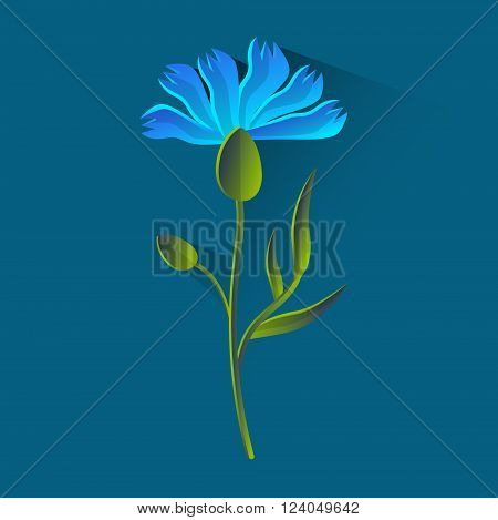 Cornflower Isolated, Bluet Over Blue Background Flat Vector Illustration